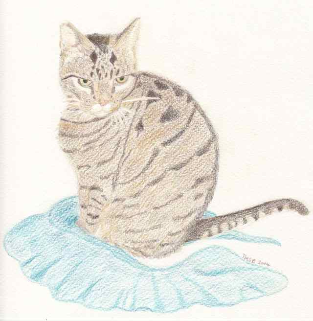 Moggy and the blue fabric by Marija Smits